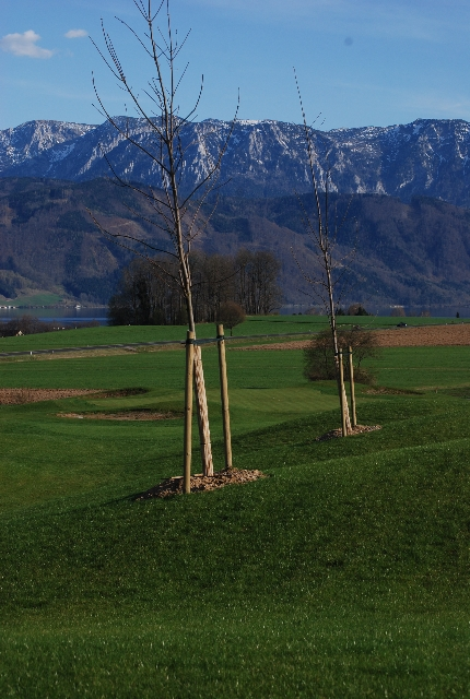 Golf Attersee 7