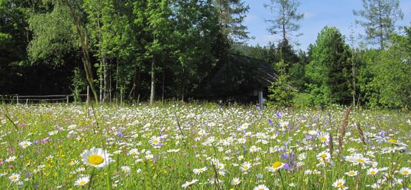 Blumenwiese-neukirchen-Panh
